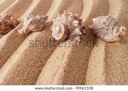 seashells in sand - stock photo