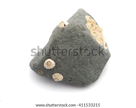 seashells in the rocks on a white background