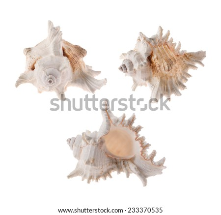 Seashells isolated on a white background - stock photo