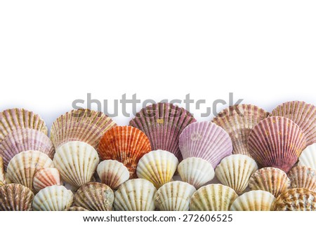 Seashells isolated on a white background with space for advertising - stock photo