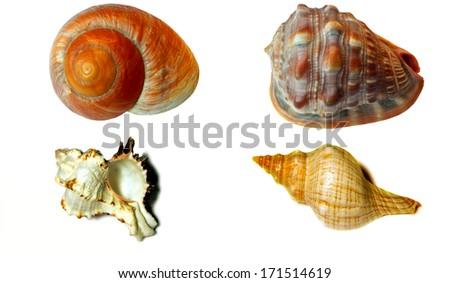 Seashells isolated on white - stock photo