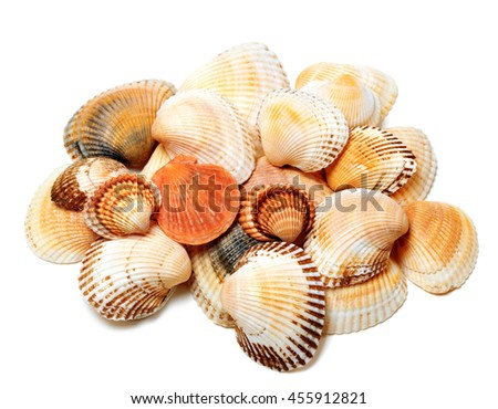 Seashells of anadara and scallop. Isolated on white background - stock photo