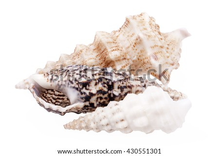 Seashells of  Auger shells called Auger snails isolated on white background. - stock photo