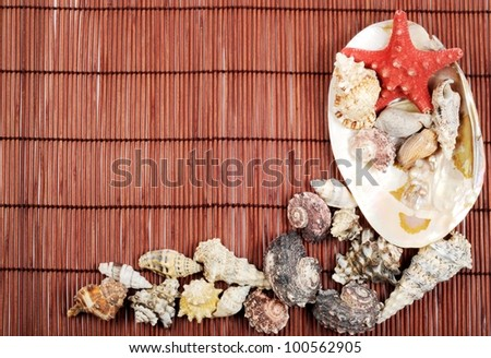 Seashells on a brown background , with copy space