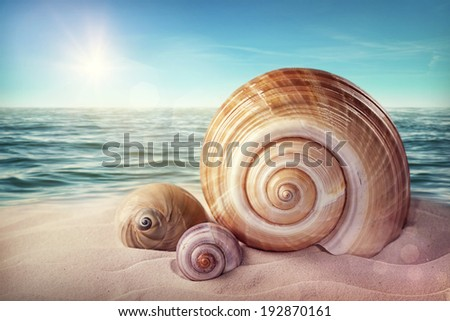 Seashells on a sandy beach - stock photo