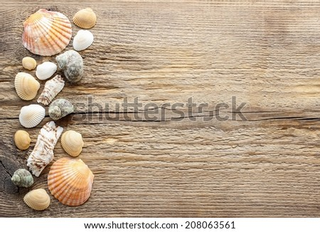 Seashells on a wooden background. Copy space - stock photo