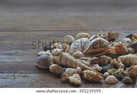 Seashells on a wooden table