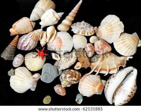 seashells on black background - stock photo