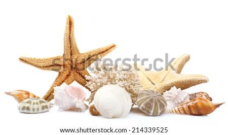 Seashells on sand, isolated on white - stock photo
