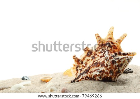 Seashells on sand,isolated on white background. - stock photo