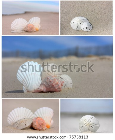 Seashells on the beach collage - stock photo