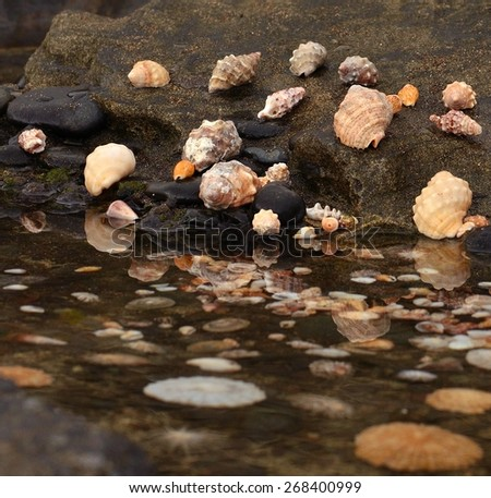Seashells on the shore - stock photo