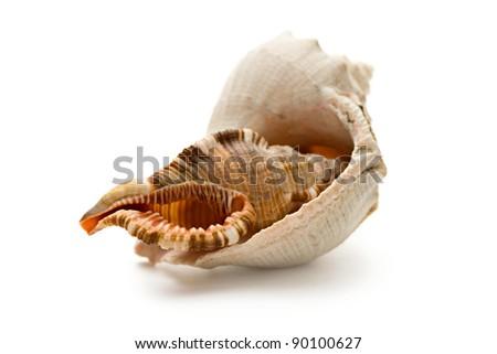 Seashells on the white background - stock photo