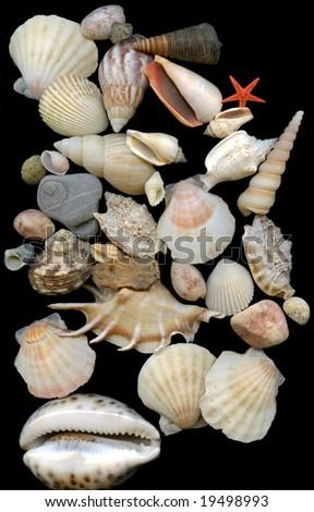 Seashells set on black background - stock photo