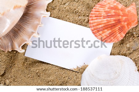 Seashells with sand as background.