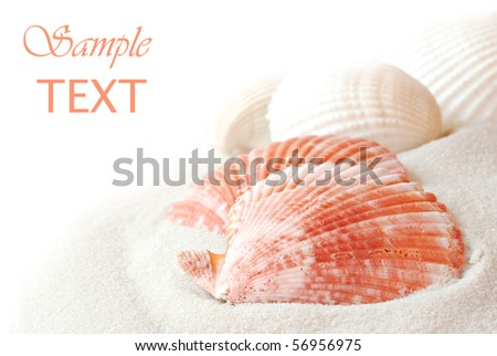 Seashells with sand on white background with copy space.  Macro with shallow dof. - stock photo