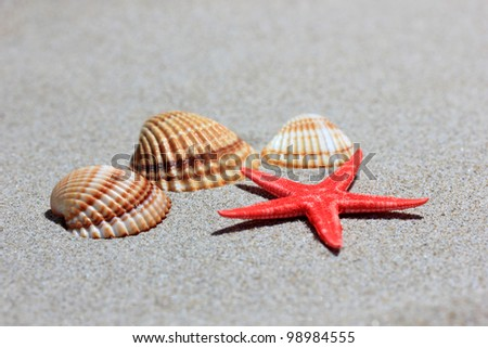 Seashells with starfish on the sandy beach