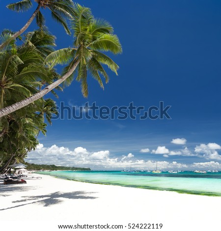 Seashore with coconut palm trees. Tropical destinations