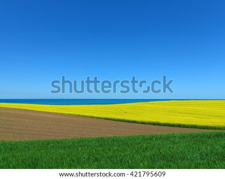 seaside agrarian landscape with blooming canola field