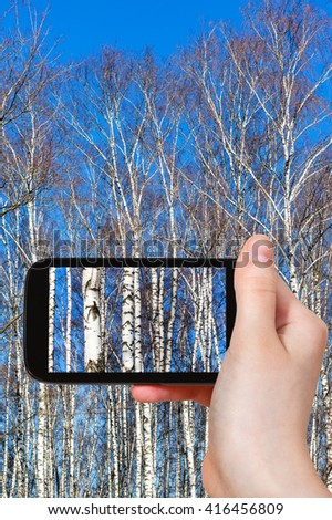 season concept - tourist photographs birch tree trunks in sunny spring day on smartphone - stock photo
