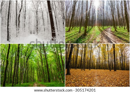 season forest wood  backgrounds.  Winter, Spring, Summer, Autumn - stock photo