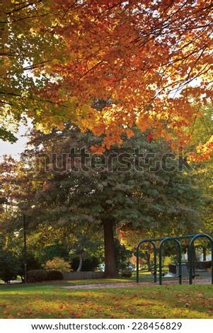 Seasonal changes in a public park. - stock photo