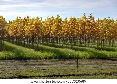 Seasonal changes of tree foliage on a farm rural Oregon. - stock photo
