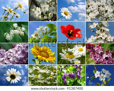 seasonal flowers collage - stock photo
