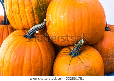 Seasonal raw pumpkins Background, Selective focus, Shallow DOF - stock photo