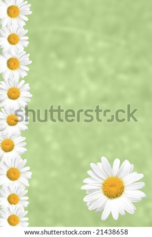 Seasonal Summer or Spring Daisy and green grass background