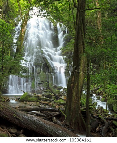 Seasonal waterfall and fallen tree seen through the forest at Rinc�³n de la Vieja National Park in Costa Rica - stock photo