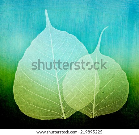 seasonal, white foliage  - stock photo