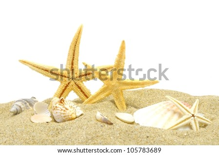 seastar and sand bank isolated on white background - stock photo