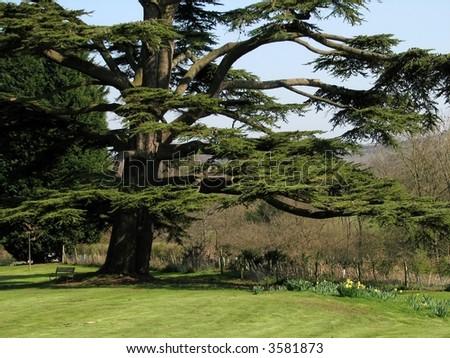 Seat under the Cedar Tree - stock photo