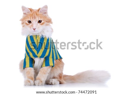 seated cat wearing clothes is looking at the camera - stock photo