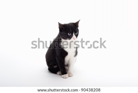 seated cute black and white kitten - stock photo