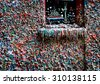 Seattle gum wall with colorful bubblegum stuck together - stock photo