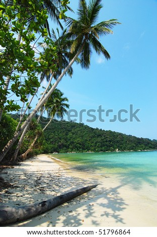 seaview with coconut tree - stock photo