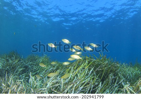 Seaweed and fish in ocean - stock photo