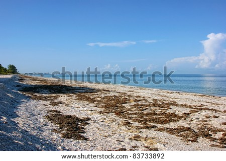 Seaweed covered Bonita beach in Bonita Springs Florida at early morning.