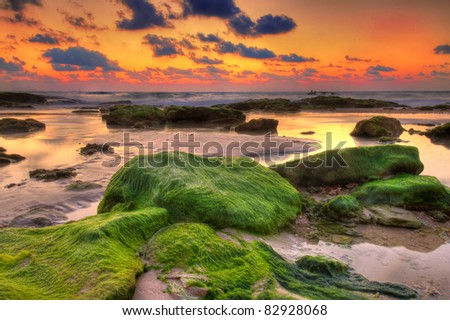 Seaweed covered rocks at sunset - stock photo