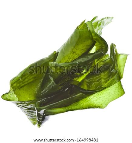 seaweed kelp ( laminaria ) wet heap pile close up isolated on white background - stock photo