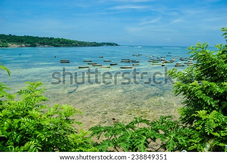 Seaweed plant at low tide on the Nusa Lembongan island. Bay with boats.  Bali, Indonesia. - stock photo