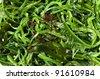 seaweed salad - stock photo