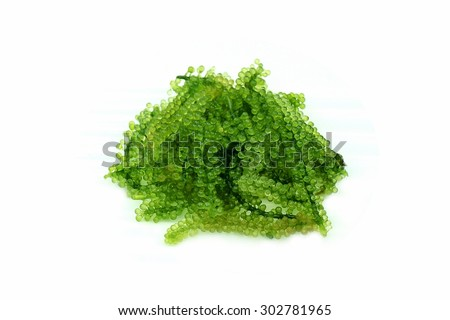 Seaweed Salad isolated on white background. Oval sea grapes seaweed. Healthy Food. - stock photo