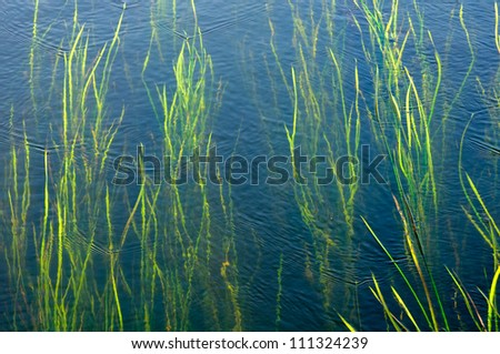 Seaweeds in Water - stock photo