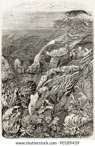 Seaweeds old illustration. By unidentified author, published on L'Illustration, Journal Universel, Paris, 1858