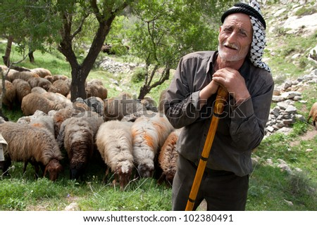 SEBASTIA, PALESTINIAN TERRITORIES - APRIL 7: His way of life threatened by changing politics and economics, an elderly shepherd tends his flocks near the West Bank village of Sebastia, April 7, 2012. - stock photo