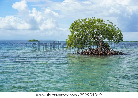 Secluded mangrove tree in the water with an island at the horizon, Caribbean sea, Panama, Bocas del Toro archipelago - stock photo