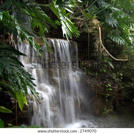 secluded waterfall  cascading over rocks in dense foliage